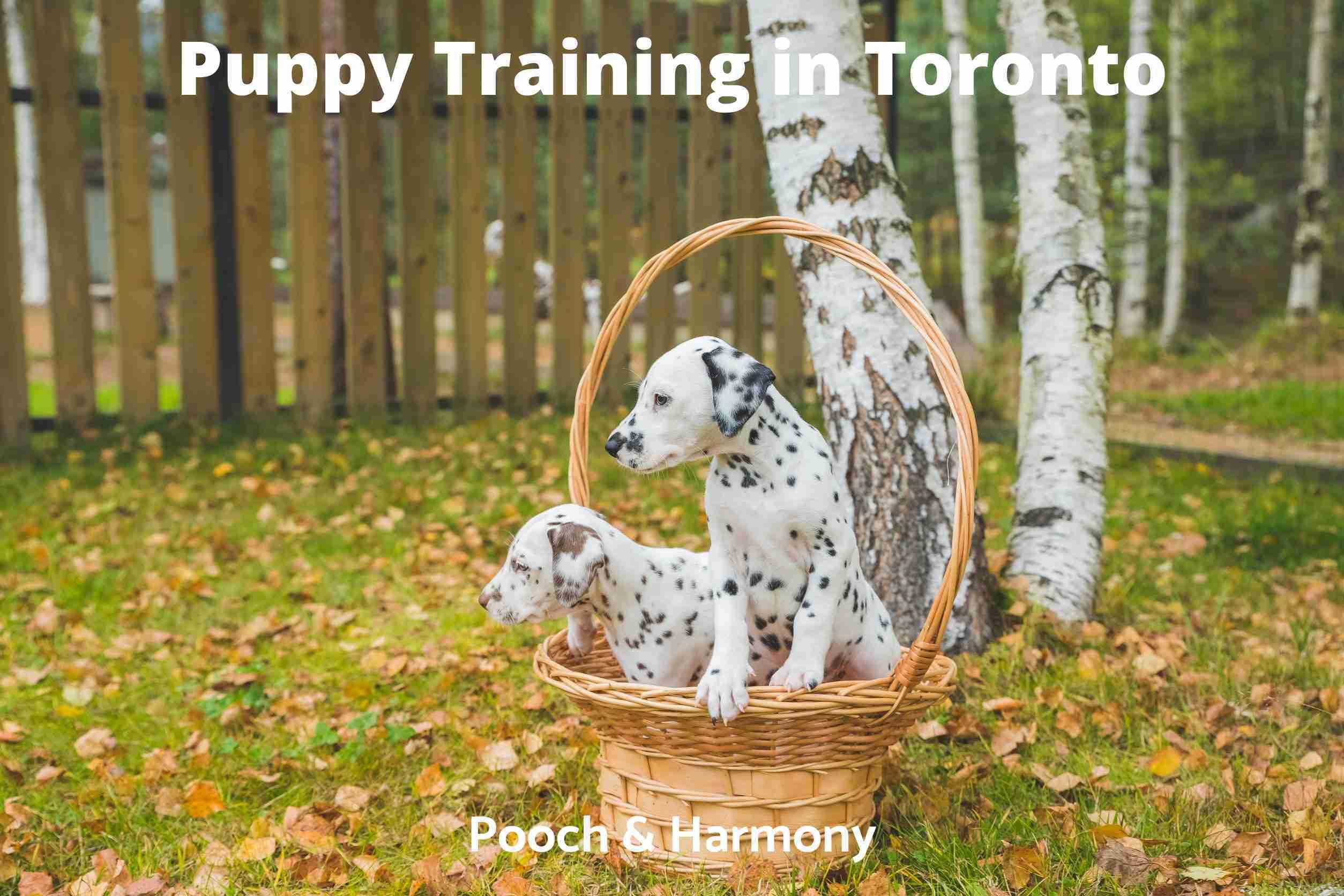 Puppy Training in Toronto