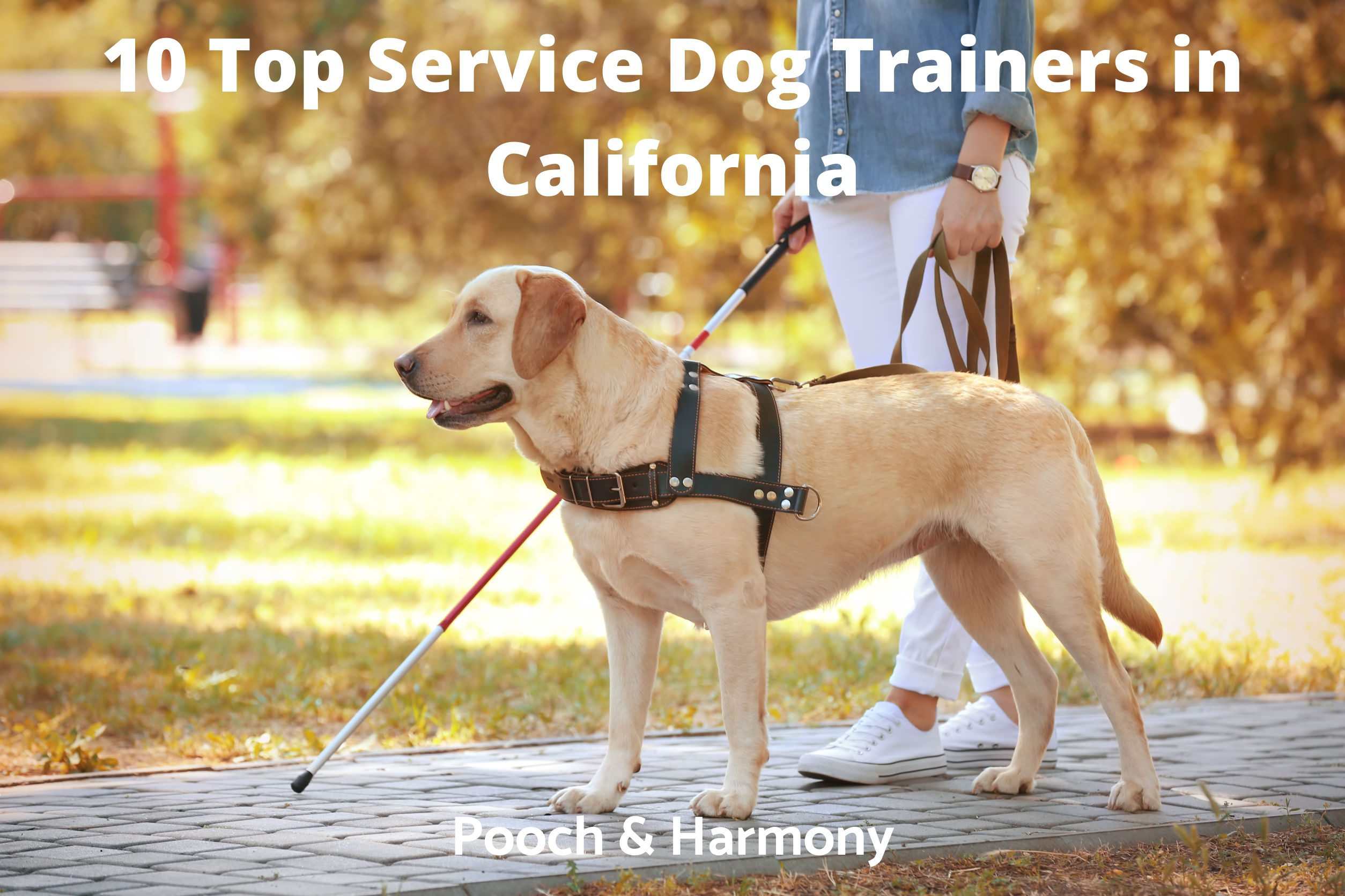 Service Dog Trainers in California