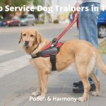 Service Dog Trainers in Texas