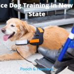 Service Dog Training in New York State