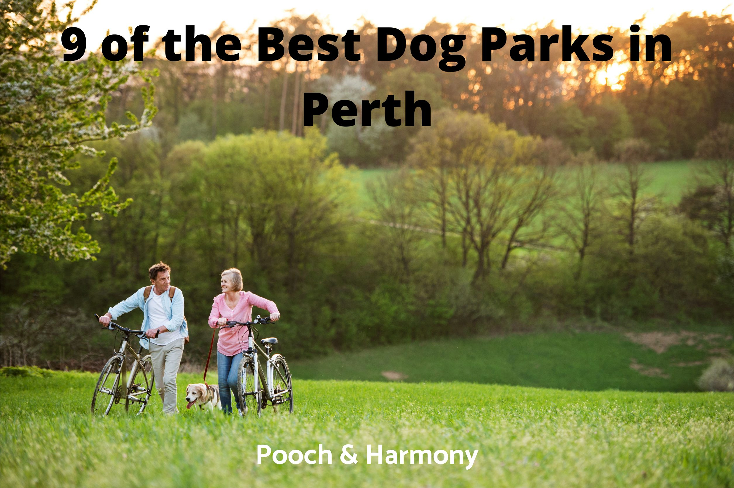Best Dog Parks in Perth